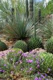 Stationnement national de Saguaro, Etats-Unis Image libre de droits