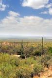 Stationnement national de Saguaro, Etats-Unis Photos stock