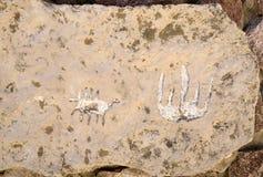 Stationnement national de Timna Image libre de droits