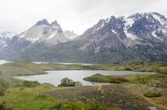 Stationnement national de Torres del Paine Images stock