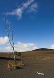 Stationnement national de volcans d'Hawaï - journal de dévastation Photographie stock libre de droits