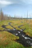 Stationnement national de Yellowstone photographie stock libre de droits