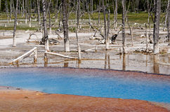 Stationnement national de Yellowstone, Wyoming, Etats-Unis Photo stock