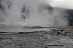 Stationnement national de Yellowstone, Wyoming, Etats-Unis Photos stock