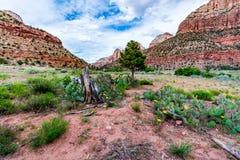 Stationnement national de Zion, Utah photos libres de droits
