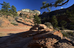 Stationnement national de Zion, Utah, Etats-Unis Photo libre de droits