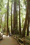 Stationnement national en bois de Muir Images libres de droits