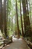 Stationnement national en bois de Muir Images stock