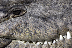 Stationnement national la Floride Etats-Unis d'état de marais de crocodile images stock