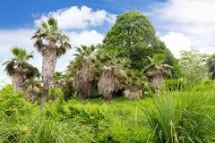 Stationnement tropical dans l'arborétum, ville de Sotchi Image stock