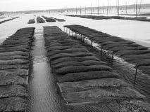 Stationnements d'huître Images stock