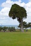 Stationnez à la côte de l'océan pacifique Photographie stock