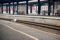 stationsdrevlopp Royaltyfri Fotografi