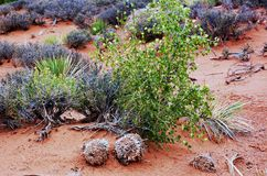 Statlig utah vegetation Arkivfoto
