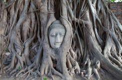 Statua buddista della vecchia testa della pietra bloccata in albero immagini stock libere da diritti