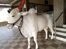 Statua Bullock Obrazy Stock