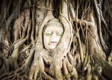 Statua del Buddha nelle radici dell'albero fotografia stock libera da diritti
