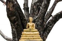 Statua del Buddha in Tailandia Fotografia Stock