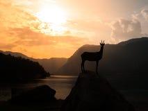 Statua del camoscio di Goldhorn vicino al lago Bohinj Fotografia Stock Libera da Diritti
