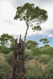 Statua dell'ancora a Cala Ratjada, Spagna Fotografie Stock