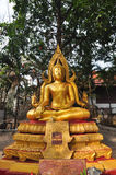 Statua dell'oro di Buddha in Wat Bangkung, Ampawa, Tailandia Fotografia Stock