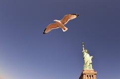 Statua della libertà - gabbiano Immagini Stock