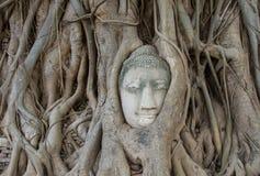 Statua di Buddha nelle radici dell'albero a, Ayutthaya, Tailandia Fotografia Stock