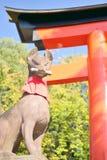 Statua di Fox al santuario di Fushimi Inari a Kyoto Immagine Stock