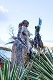 Statua di Hatuey in Baracoa/Cuba Immagine Stock