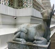 Statua di pietra di una capra a Wat Arun - Temple of Dawn fotografie stock