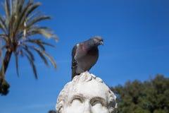 Statua e un piccione Fotografie Stock