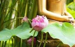 Statua rosa di Buddha del fondo del loto Immagini Stock
