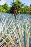 Statua w agava polu Zdjęcia Royalty Free