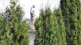 Statua w cmentarzu z drzewami zbiory wideo