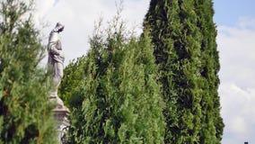 Statua w cmentarzu z drzewami zdjęcie wideo