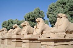 Statue antiche delle sfingi dalla testa RAM in tempio di Karnak Immagine Stock