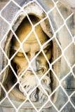 Statue bedeckt mit Netz Stockbilder