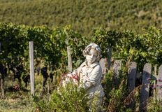 Statue of a boy holding a basket with grapes on the background of vineyards in the Saint Emilion region. stock photo