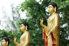 Statue of Buddha in golden standing position. royalty free stock images