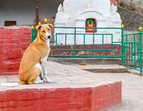 Statue of Buddha in  Kathmandu,Nepal Stock Photos