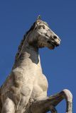 Statue of Castor with a Horse at Capitoline Hill in Rome Royalty Free Stock Photos