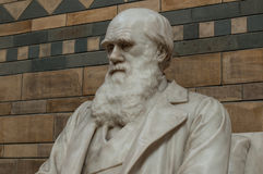 Statue of Charles Darwin. The creator of the theory of evolution Stock Image