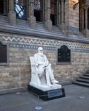 Statue of Charles Darwin in the Natural History Museum, London Royalty Free Stock Photos
