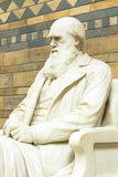 Statue of Charles Darwin at the Natural History Museum. Royalty Free Stock Images