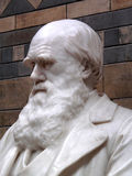 Statue of Charles Darwin1809 Stock Photography