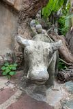 The child sitting on the buffalo royalty free stock image