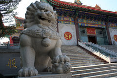 A Statue of chinese imperial Lion Royalty Free Stock Photos