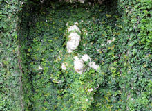 Statue covered with leaves. A woman statue is covered with leaves Royalty Free Stock Images