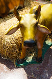 Statue of cow munching hay Royalty Free Stock Photography