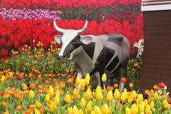 Statue of cow with tulips. And tulips wallpaper for background (from flowers exhibition in Thailand Stock Images